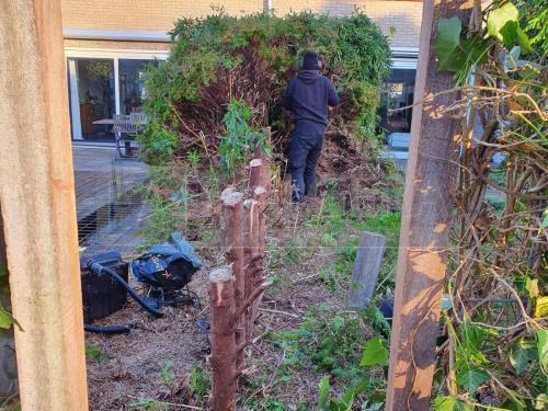 friesland-tuinmaterialen-heg-struik-verwijderen-01